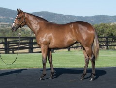LOT 314 Charge Forward x Personification filly
